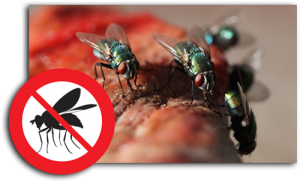 fly-control-pest-control