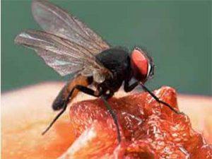 pest-control-services-files